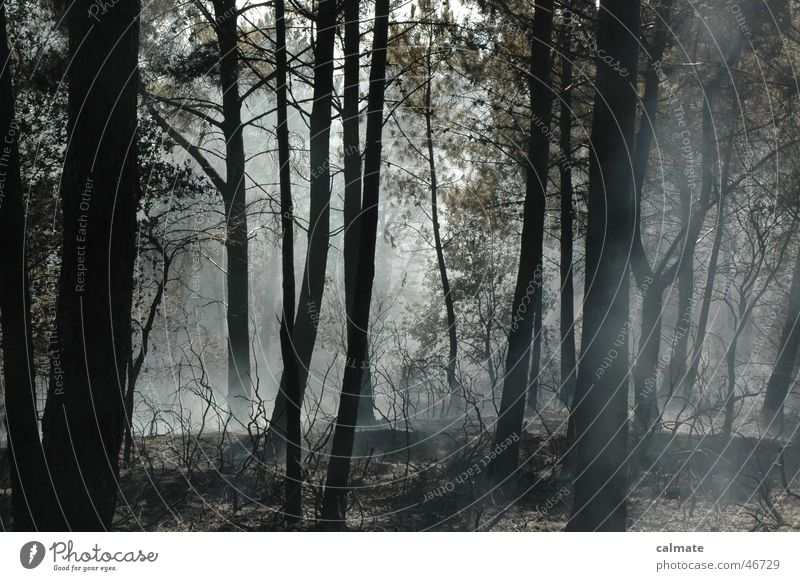 -- Waldbrand -- Natur Baum Brand Rauch glühen Waldbrand