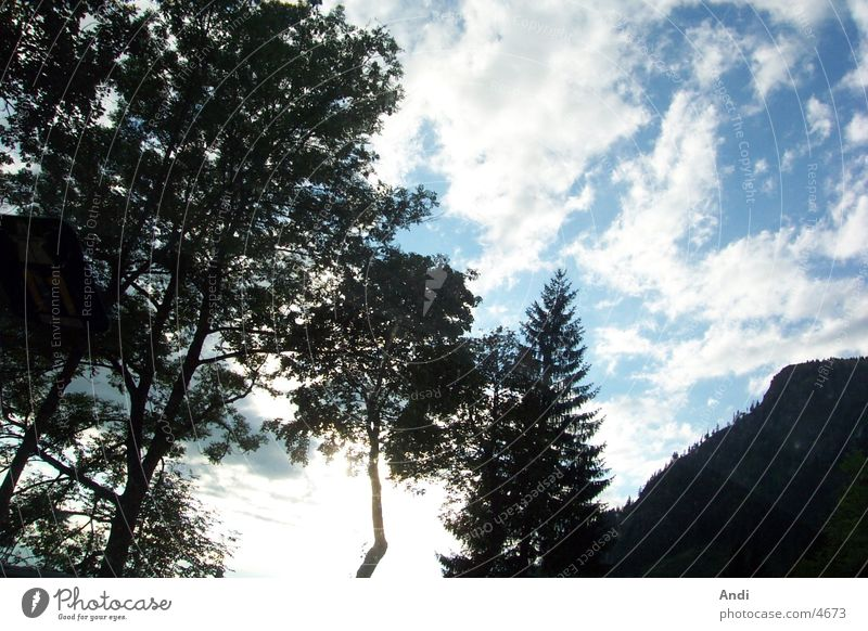 Trees Natur Himmel Baum Wolken