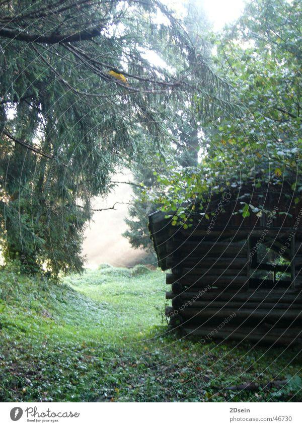 Hütte im Wald Natur grün mystisch