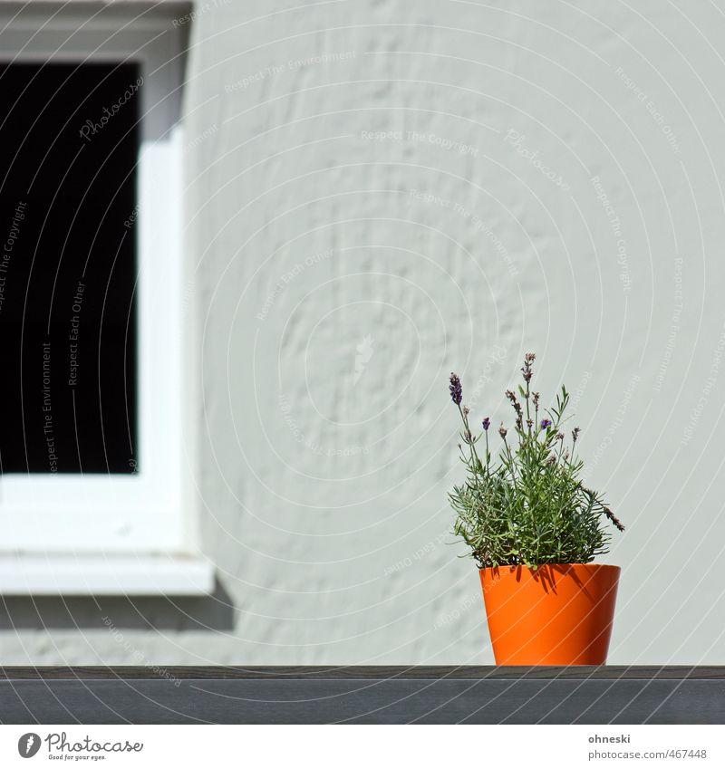 Farbtupfer Pflanze Fenster orange Fassade Dekoration & Verzierung Blumentopf Lavendel