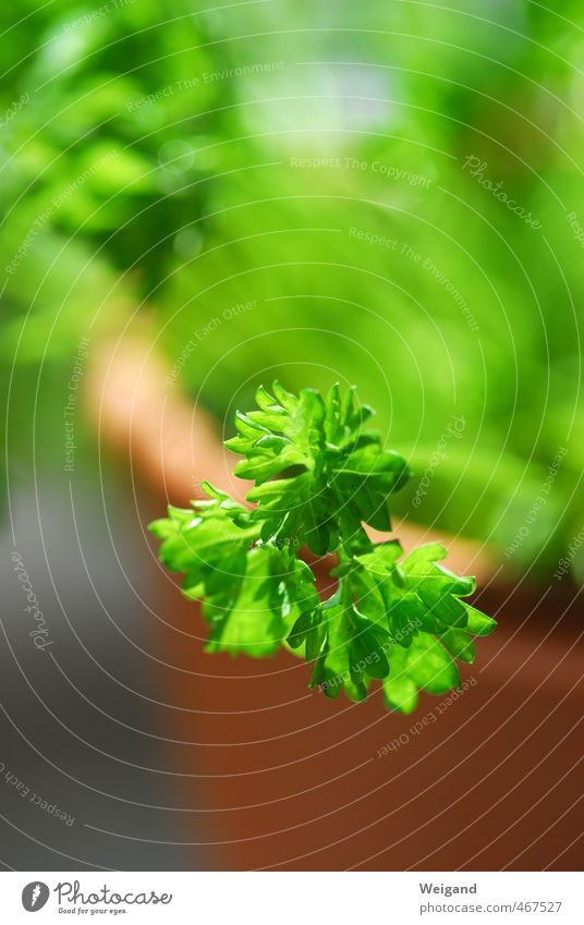Peters Lilie grün Gesundheit Lebensmittel Ernährung genießen Küche Kräuter & Gewürze Bioprodukte Diät Blumentopf Salat Salatbeilage Vegetarische Ernährung