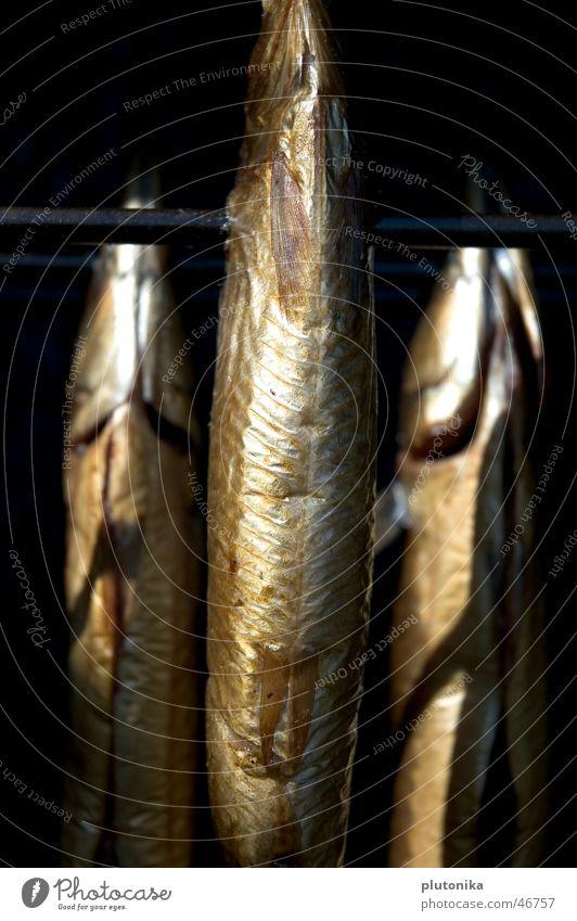 Smoke Kills Treptow Europa glänzend aufgespiesst hängen Spree Ernährung geräuchert Deutschland Tod silber Fisch