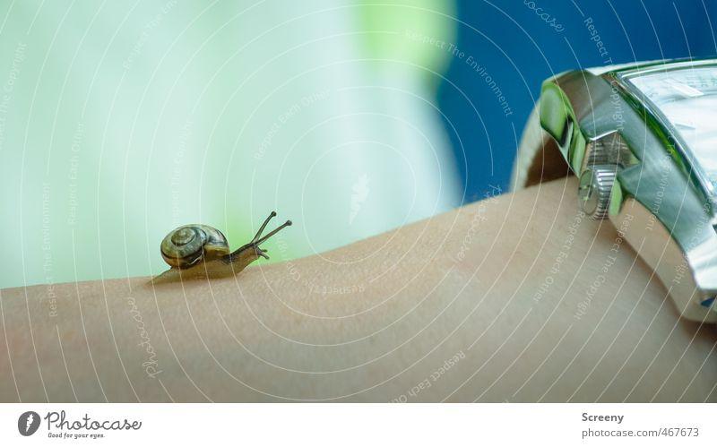 Rennen gegen die Zeit Natur ruhig Tier Bewegung klein Uhr Arme Haut warten Abenteuer Ziel Gelassenheit rennen anstrengen Schnecke geduldig