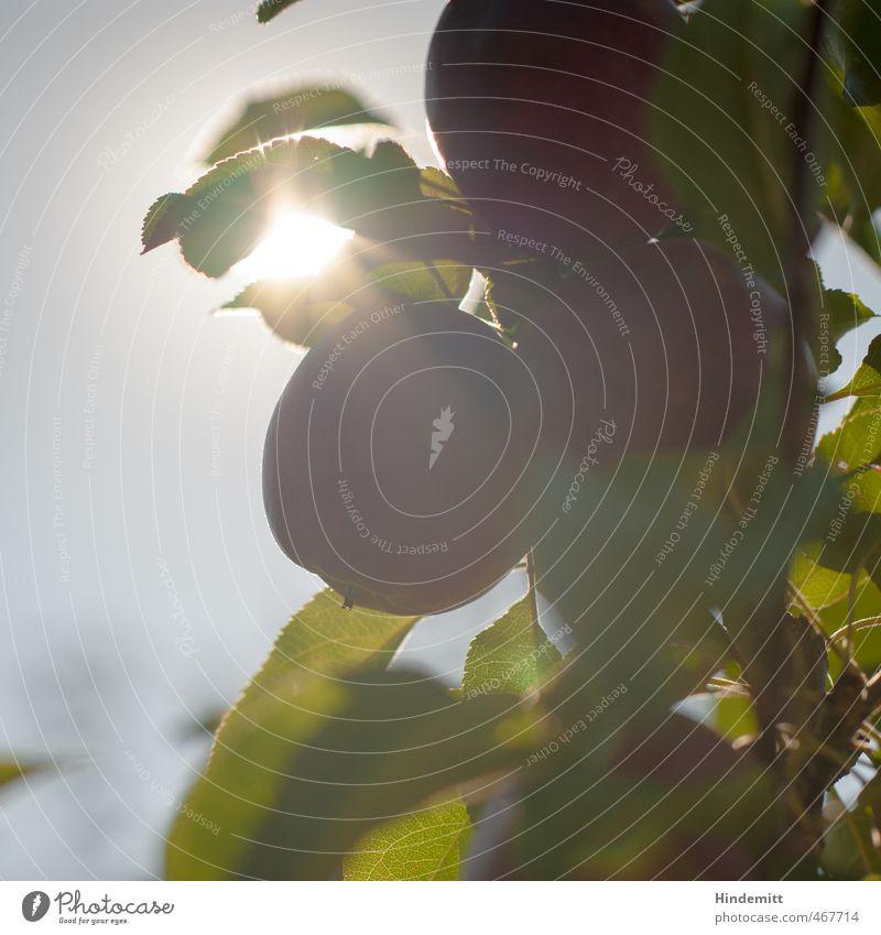 Süß und saftig werden Himmel Natur grün Pflanze Sommer Baum rot Blatt Umwelt Wärme Herbst Gesundheit Lebensmittel leuchten Schönes Wetter süß