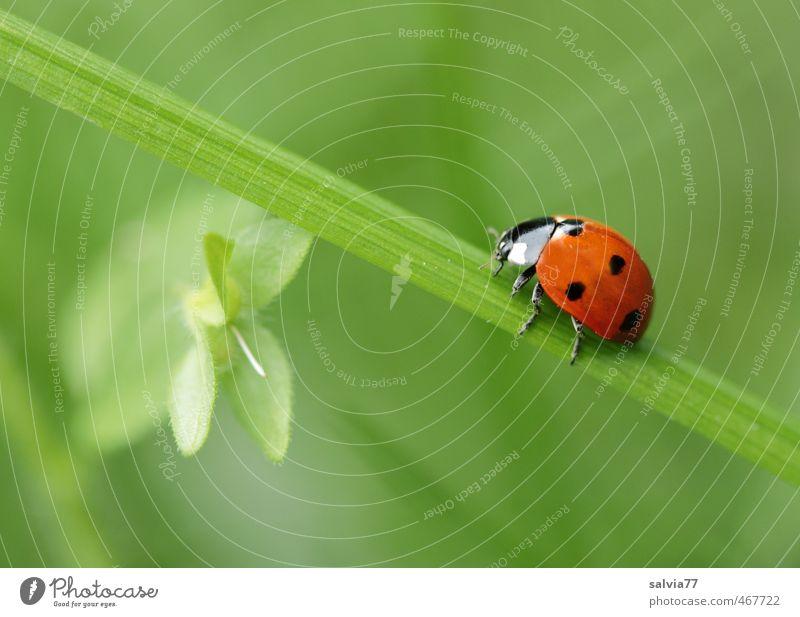 go green Natur Pflanze grün Farbe Sommer rot Blatt ruhig Tier Umwelt Frühling Wiese Gras Wege & Pfade Glück Wildtier