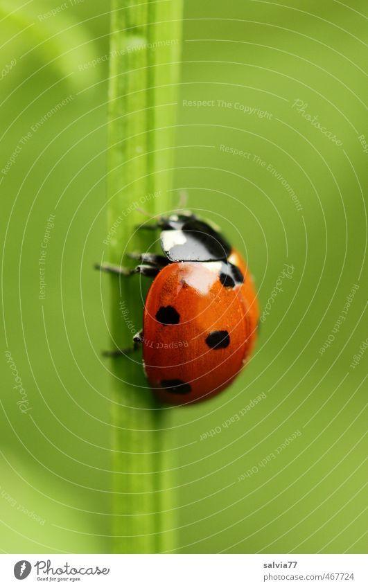 nach oben Umwelt Natur Pflanze Tier Frühling Sommer Gras Blatt Grünpflanze Garten Wiese Wildtier Käfer 1 krabbeln grün rot Vertrauen ruhig Hoffnung Glück