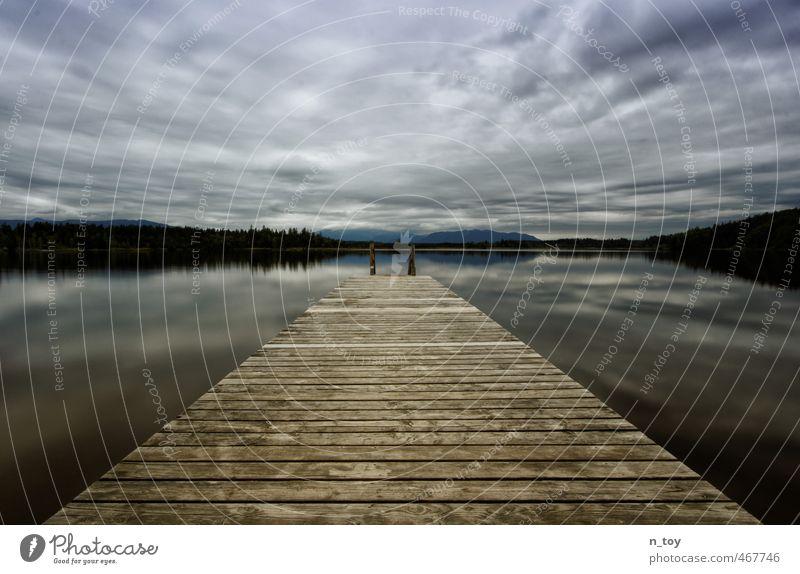 warten aufs Gewitter II Umwelt Natur Wasser Gewitterwolken Herbst Wald Moor Sumpf See entdecken bedrohlich blau braun Gefühle Stimmung ruhig Abenteuer Idylle