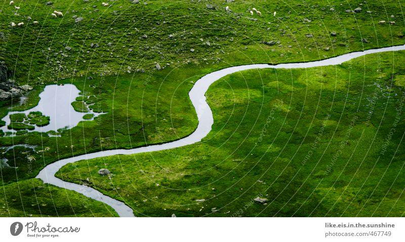 lust auf nen tag im grünen!? Umwelt Natur Landschaft Pflanze Tier Sommer Gras Teich Bach Fluss Ferne Schaf Weide Alm Bergwiese Hochplateau Fressen Flußbett