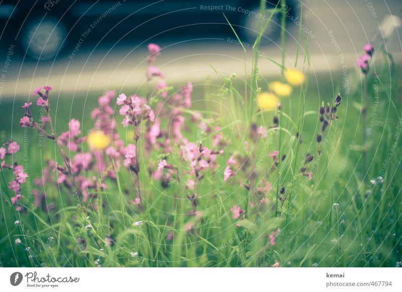 Straßenrand Umwelt Natur Pflanze Sommer Schönes Wetter Blume Gras Wildpflanze Wiese Verkehr Verkehrswege Personenverkehr Autofahren PKW Blühend Wachstum