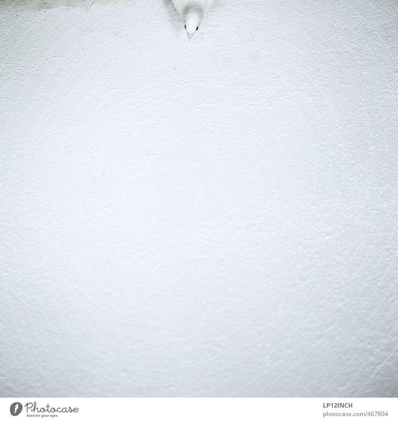 Hereinspaziert. XXXXXVII Tier Vogel 1 klein reinschauen Wand Boden weiß Tierjunges Farbfoto Außenaufnahme Textfreiraum unten Textfreiraum Mitte Tag