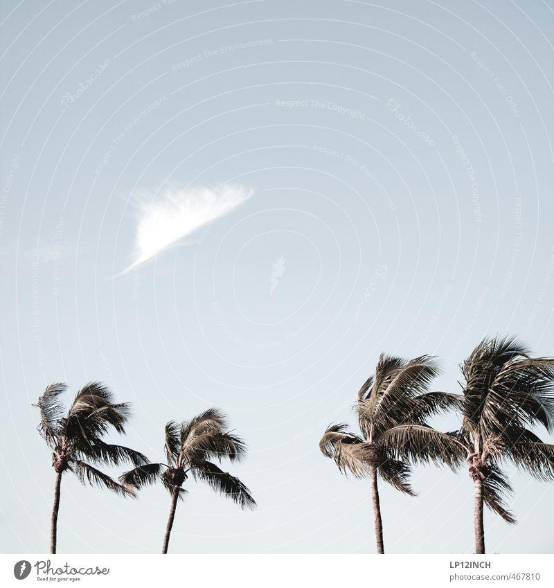 Stormy. XXXXXII Ferien & Urlaub & Reisen Tourismus Ausflug Ferne Sommer Sommerurlaub Strand Umwelt Natur Himmel Wolken Schönes Wetter Unwetter Wind Sturm Baum