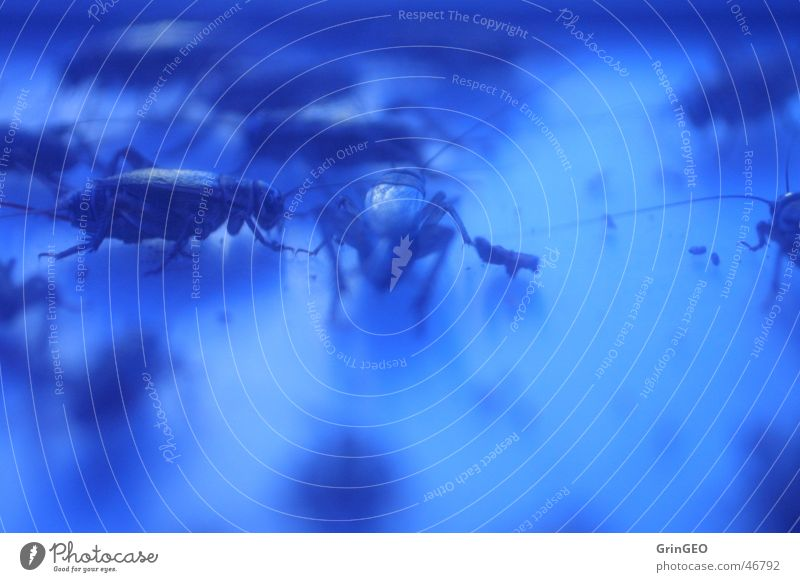 Grillen im Rampenlicht Tier Heuschrecke