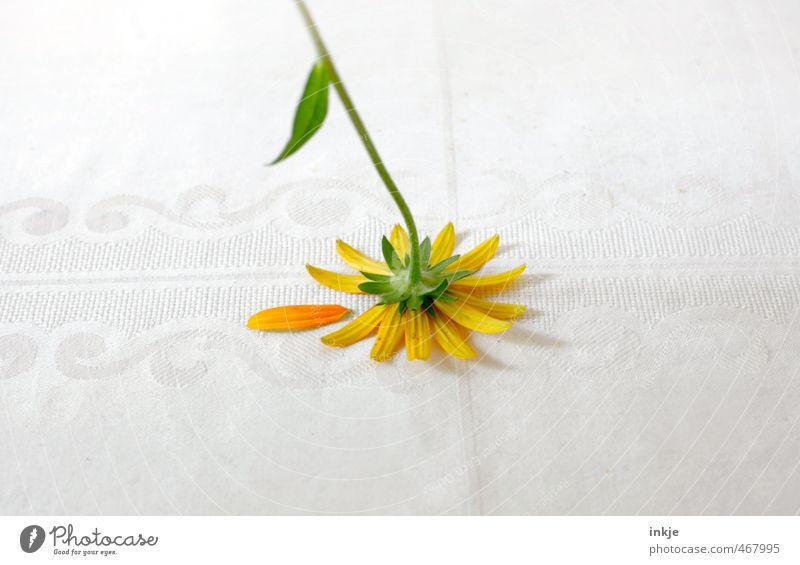 Schluss mit lustig Stil Dekoration & Verzierung Sommer Blume Blüte Margerite Blütenblatt Tischwäsche liegen Traurigkeit verblüht kaputt trist unten gelb grün