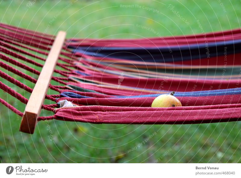 Hängen und Fallen blau grün weiß rot ruhig Herbst Holz Garten braun Freizeit & Hobby Frucht nass Pause Apfel Ernte herbstlich