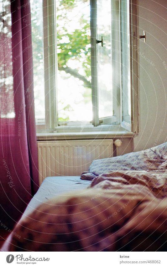 Morgens schön Sommer Erholung Fenster Wärme feminin Glück hell Wohnung träumen Raum offen ästhetisch Lebensfreude retro weich