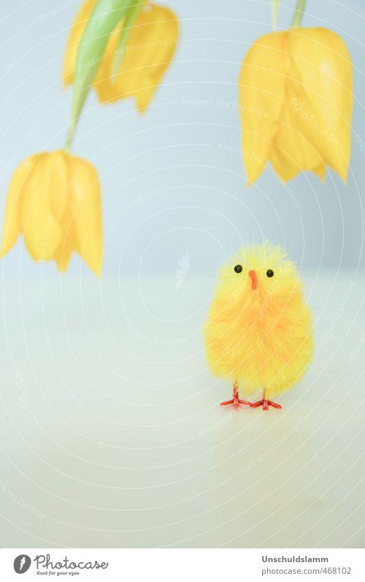 Happy Yellow Lifestyle Stil Häusliches Leben Wohnung Feste & Feiern Ostern Pflanze Frühling Blume Tulpe Blüte Tier Nutztier Küken 1 Spielzeug Stofftiere