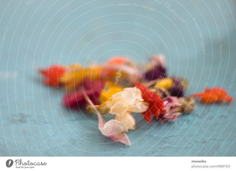 blau schön Blume rot Blatt ruhig Freude gelb Blüte Liebe Gefühle Spielen Glück Garten Feste & Feiern orange