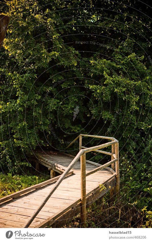 Endstation Natur. Ferien & Urlaub & Reisen Sommer Baum Erholung ruhig Freude Gesunde Ernährung Ferne Umwelt Glück Gesundheit Lifestyle Zufriedenheit Tourismus
