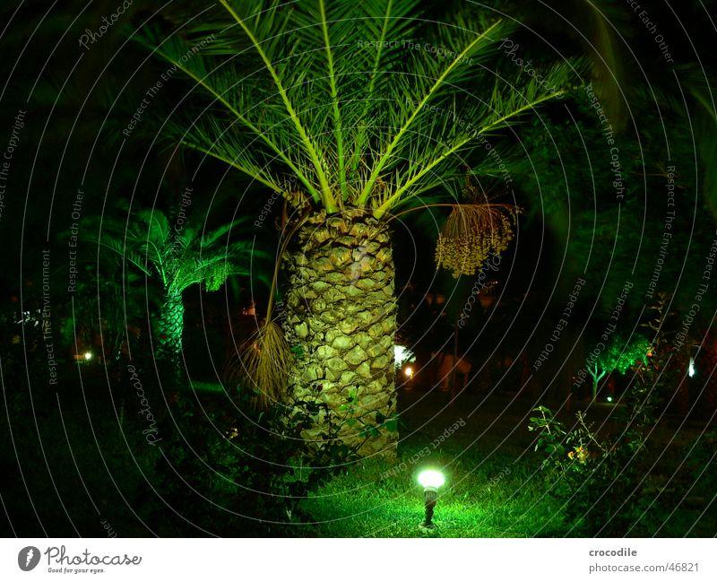 Palmä Palme grün Nacht dunkel Ferien & Urlaub & Reisen Griechenland Kos schwarz Licht Beleuchtung Scheinwerfer