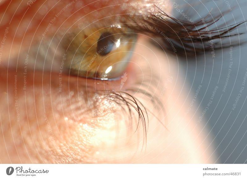 --einblick-- Auge Wimpern Augenbraue Pupille Regenbogenhaut