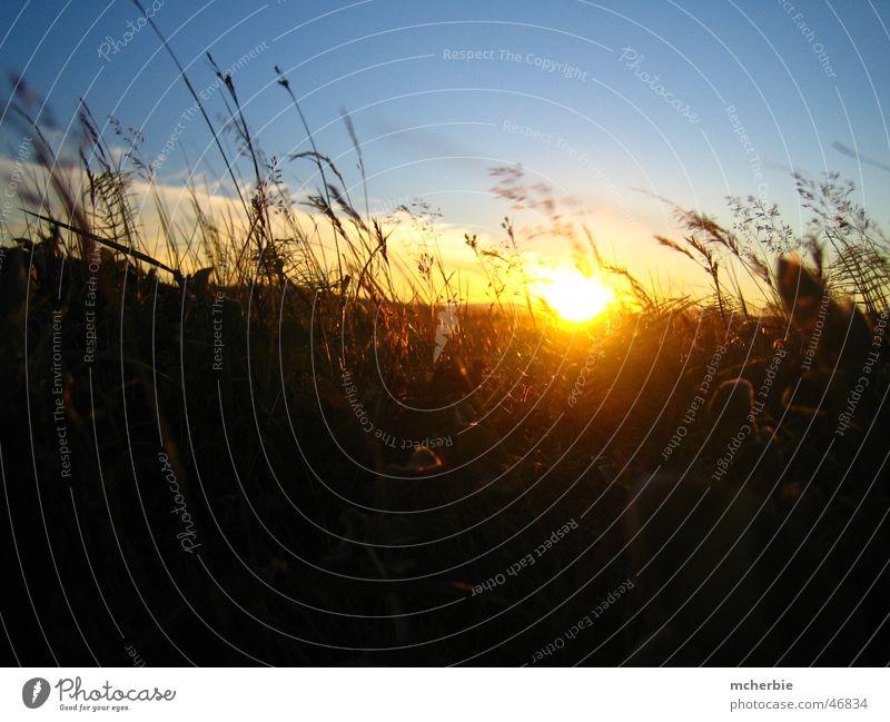Sonnenuntergang im Gras Himmel Sonne Sommer Wolken Gras Stimmung Island Halm