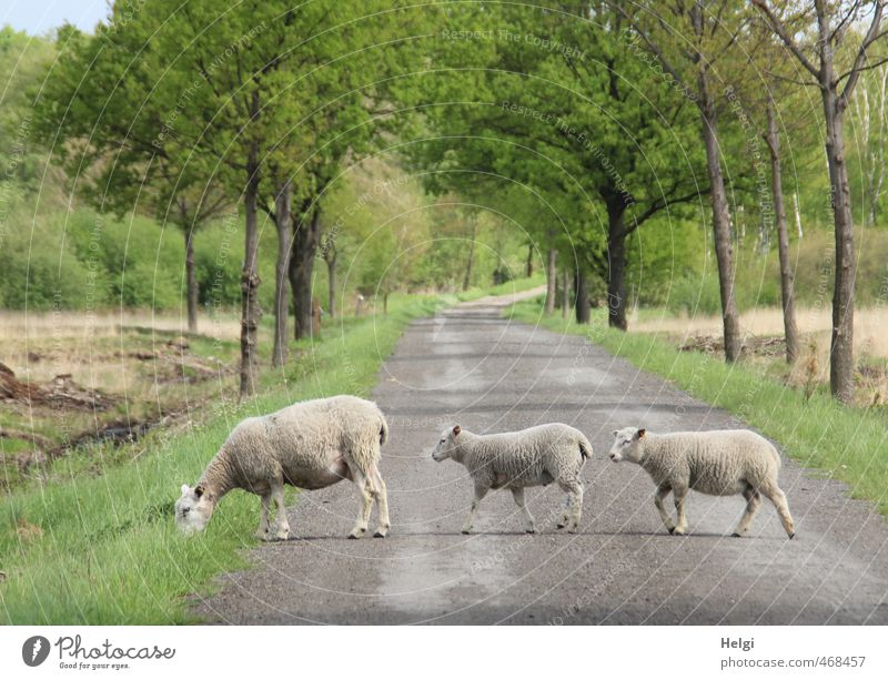 Seitenwechsel... Natur grün Pflanze Baum Landschaft Tier Umwelt Tierjunges Straße Bewegung Gras Frühling grau natürlich gehen braun