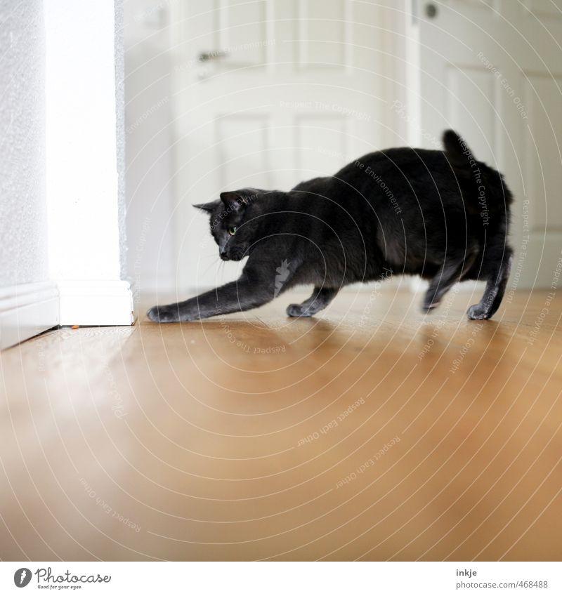Stubentiger (wild!) Lifestyle Freude Spielen Häusliches Leben Wohnung Raum Holzfußboden Holztür Tier Haustier Katze 1 fangen Jagd rennen Neugier Spieltrieb