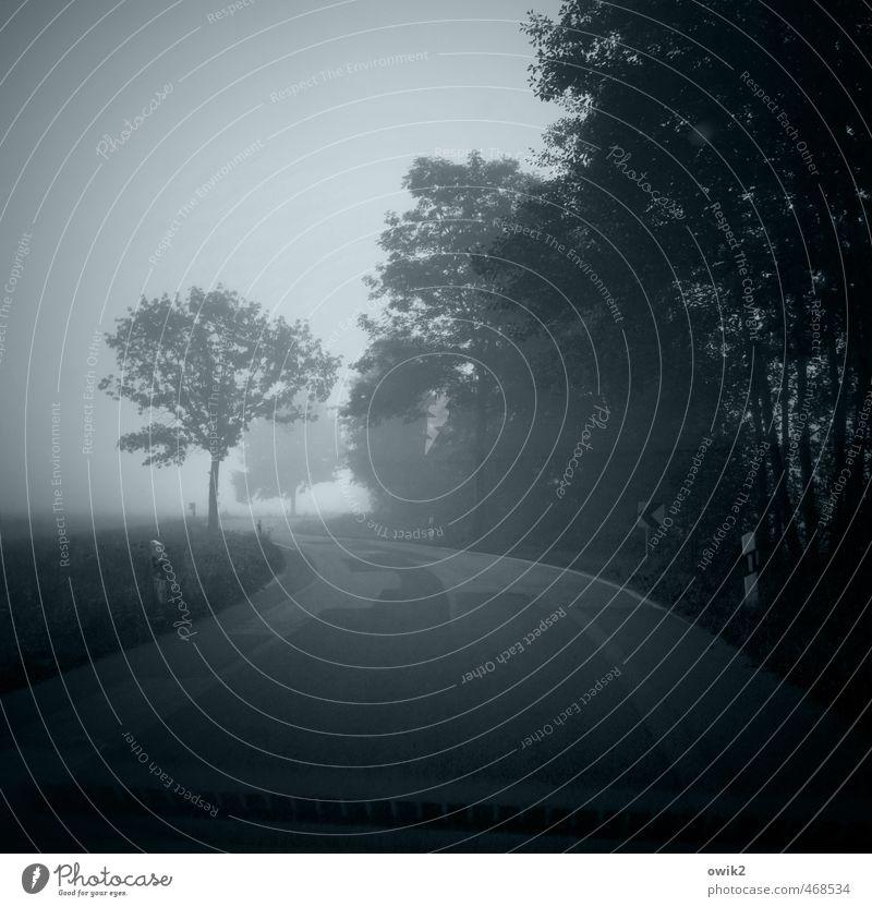 Blauer Dunst Umwelt Nebel Pflanze Baum Wald Verkehr Straßenverkehr Kurve blau unsicher Asphalt schmal eng gefährlich bedrohlich Risiko diffus Vignettierung