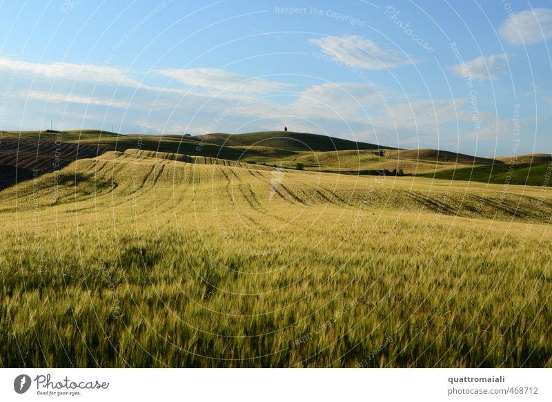 Getreidefeld in der Toskana Ferien & Urlaub & Reisen Ferne Freiheit Sommer Umwelt Natur Landschaft Horizont Schönes Wetter Feld Hügel blau gelb gold Einsamkeit