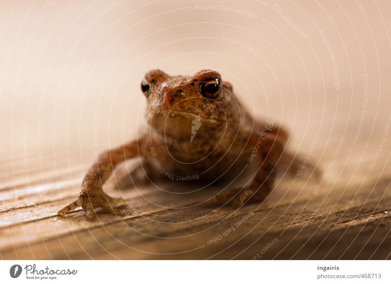 Fridolin Tier Tierjunges klein natürlich außergewöhnlich braun sitzen Wildtier warten Wachstum nass niedlich weich Vertrauen Tiergesicht skurril