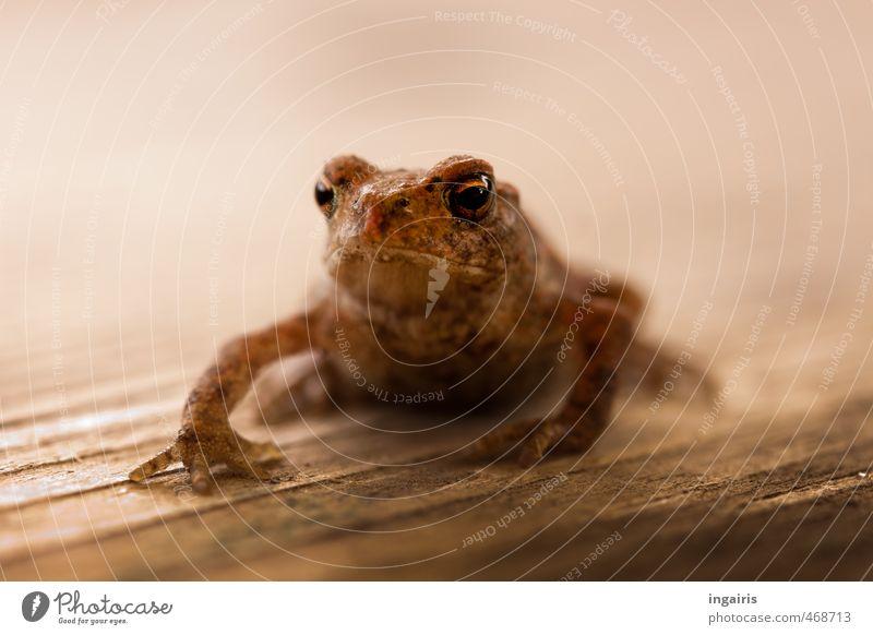 Fridolin Tier Wildtier Frosch Tiergesicht Kröte 1 Tierjunges hocken sitzen Wachstum warten außergewöhnlich exotisch klein nass natürlich niedlich schleimig