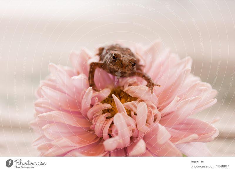 Schön festhalten Fridolin! Blume Tier gelb Umwelt Tierjunges lustig klein Stimmung braun rosa sitzen Wildtier Wachstum niedlich beobachten Neugier