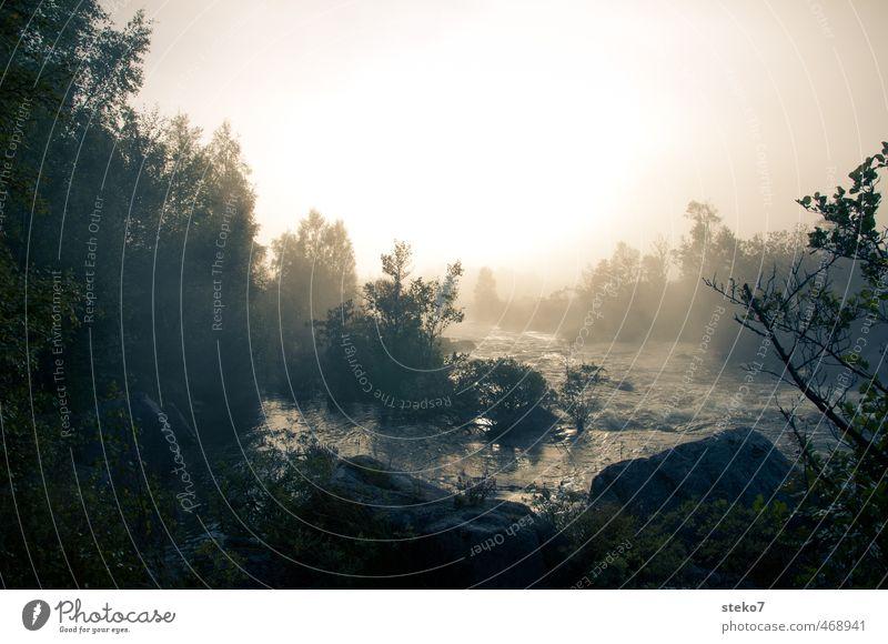 Herbstlicht Wasser Erholung Einsamkeit Wald Felsen Fluss Flussufer Schottland