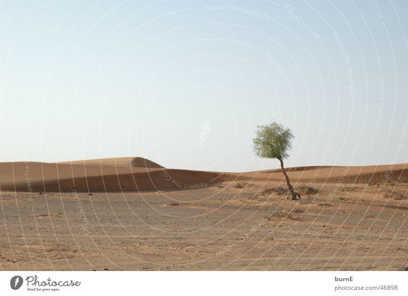 Die Wüste lebt Dubai Baum klein hell-blau Einsamkeit ruhig einzeln grün Überleben Außenaufnahme Landschaft arabische emirate Ferne Sand Himmel Schönes Wetter