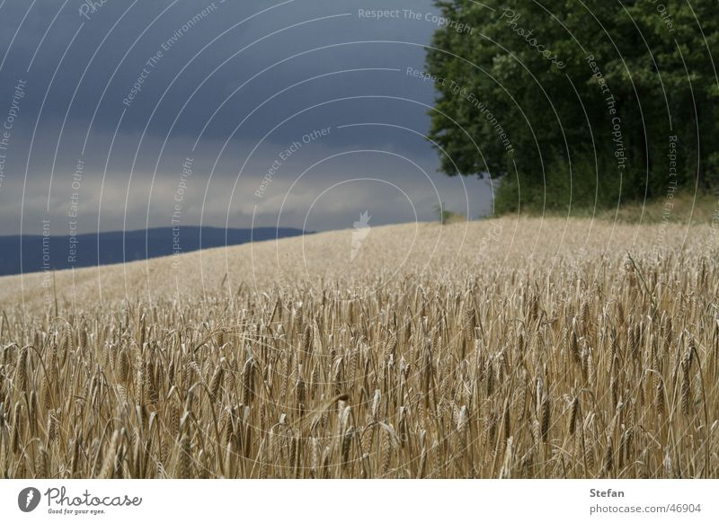 D.C.A.F Feld Baum Schweiz dunkel Gerste Himmel Getreide dark field heaven sky clouds shining