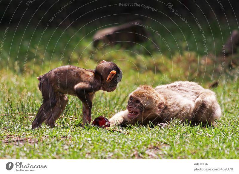 Finger weg ...! Tier Tierjunges liegen Tierpaar Neugier Zoo Aggression Neid