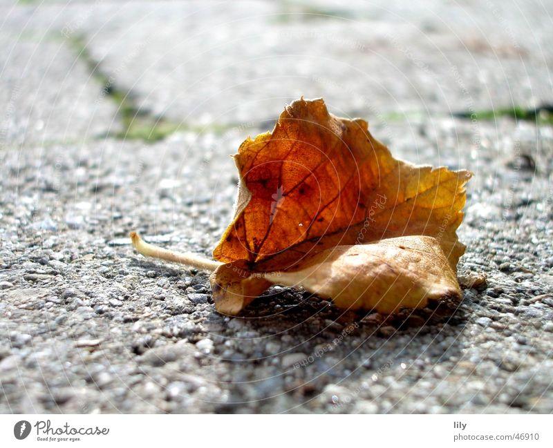 Herbst Blatt braun grau Stein