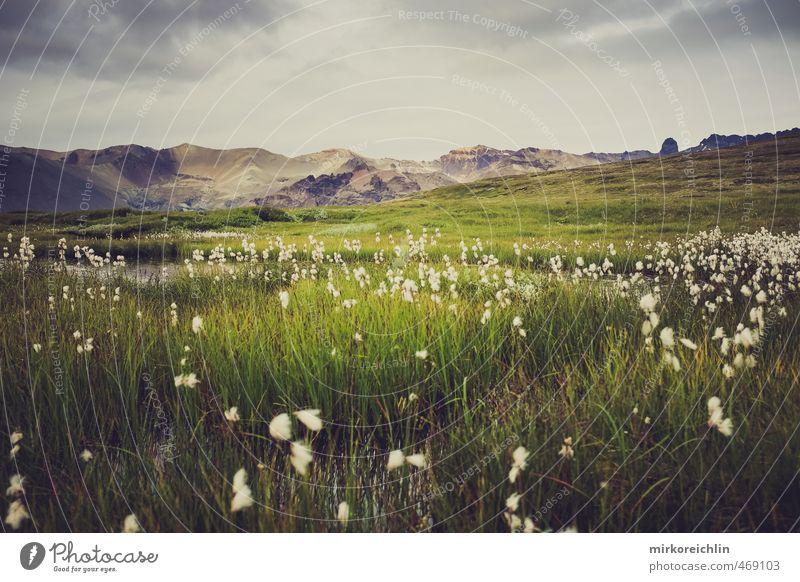 I love this planet 1 Natur Pflanze Luft Wasser Himmel Wolken Gewitterwolken Herbst Wetter Sturm Gras Grünpflanze Wildpflanze Berge u. Gebirge Gletscher Vulkan