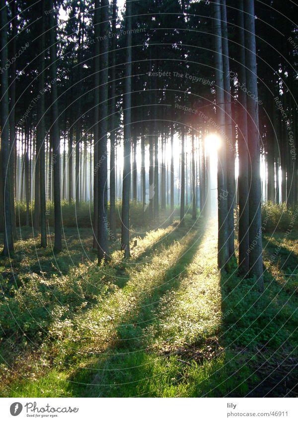 Märchenwald Wald ruhig Sonnenstrahlen Baum Einsamkeit Stimmung herbstsonne
