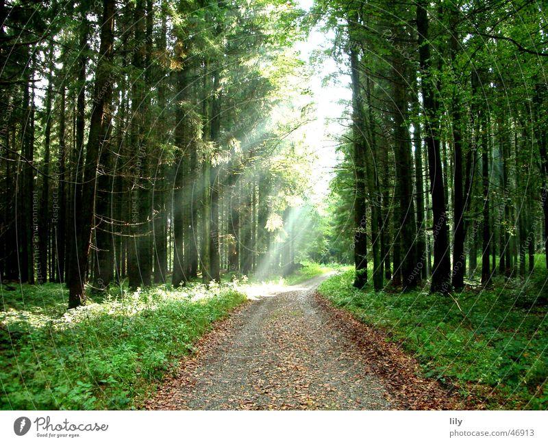 Märchenwald #2 Baum Sonne Blatt Einsamkeit Wald Herbst Wege & Pfade Fußweg