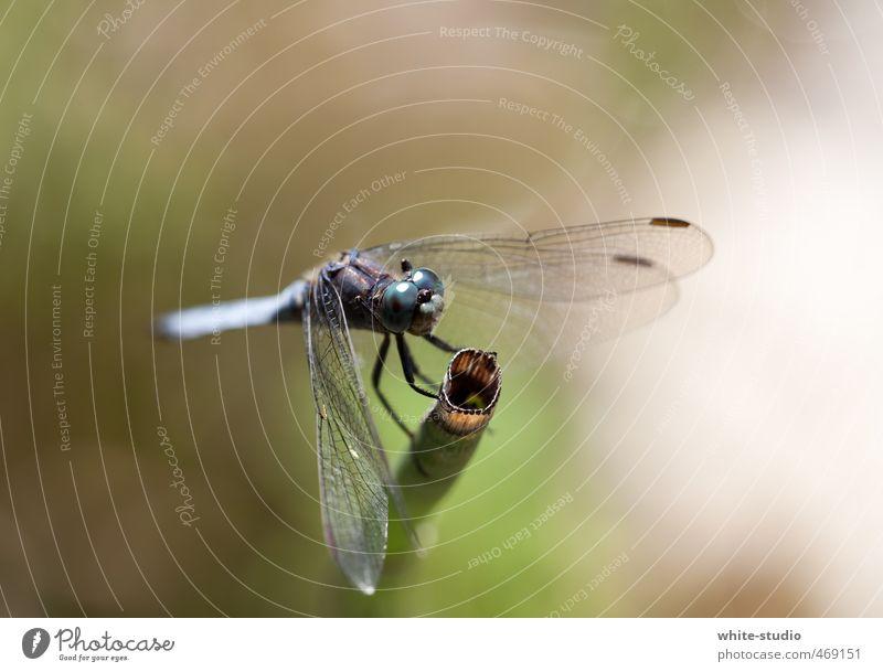 Takeoff in 3,2,1 ... blau Erholung Auge Kopf fliegen sitzen Fliege gefährlich Pause Insekt Tragfläche Flugzeugstart Stengel Flugzeuglandung Teich fliegend