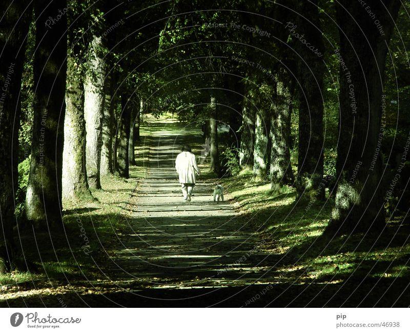 Allee Park Baum Blatt Frau Einsamkeit Trauer Denken gehen Spaziergang Hund Licht Sonnenlicht dunkel Baumstamm Wege & Pfade Mensch Traurigkeit gassi Seil