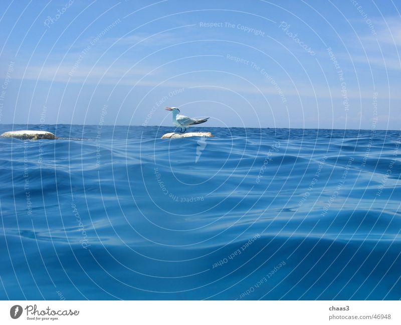 Möwe Wasser Himmel Meer blau Wellen Boje