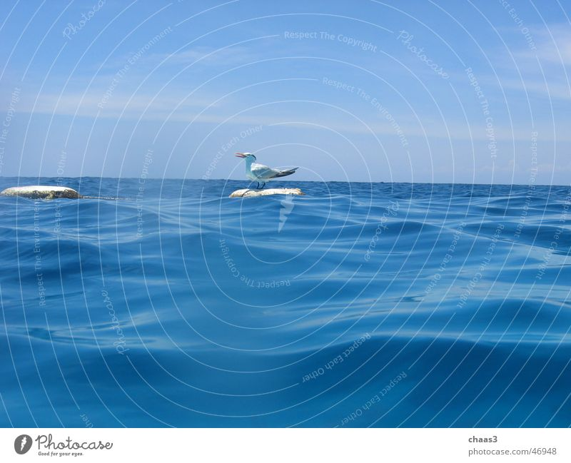 Möwe Wasser Himmel Meer blau Wellen Möwe Boje