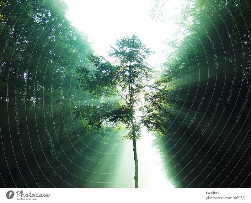 lichtbrechung Himmel Natur grün Baum Sonne Wald Erholung hell Gesundheit Kraft Beleuchtung Nebel Energiewirtschaft Wellness Licht Lichtstrahl