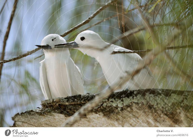 Liebe Natur blau grün weiß Sommer Tier Wald Gefühle Glück braun Vogel Zusammensein Idylle Tierpaar Wildtier