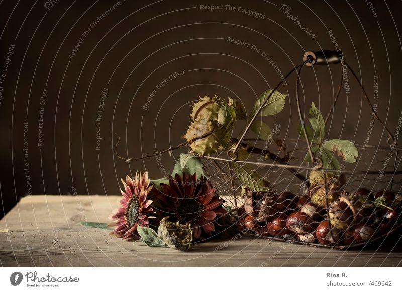 HerbstStill V rot Blüte braun Häusliches Leben Dekoration & Verzierung Wandel & Veränderung Blühend Stillleben herbstlich Sonnenblume Landleben verblüht
