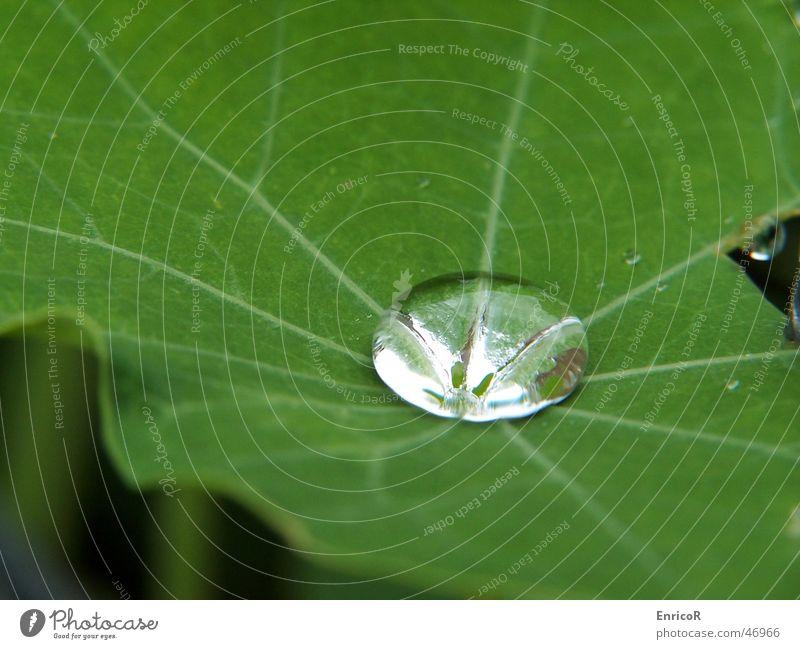 Tropfen auf Blatt Pflanze Grünpflanze Wassertropfen Regen Natur Nahaufnahme Makroaufnahme