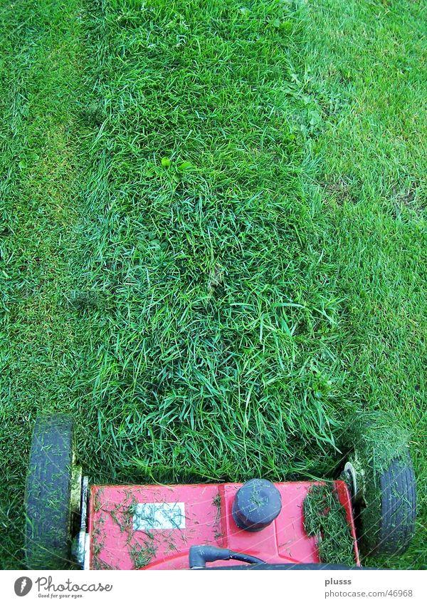 Rasenmähen Arbeit & Erwerbstätigkeit Maschine Gras Wiese Linie Streifen grün Rasenmäher geschnitten Halm Spuren rasenmähen Rad Reifenspuren Gartenarbeit