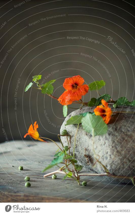 HerbstStill VI Dekoration & Verzierung Blume Blüte Kapuzinerkresse Samen Stein Blühend orange Stillleben rustikal Landleben Holztisch Ranke Innenaufnahme